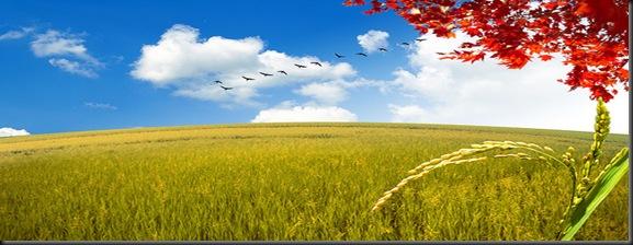 campo y trigo