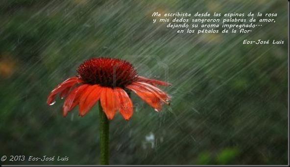 flor con lluvia